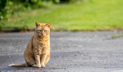 cat-on-road